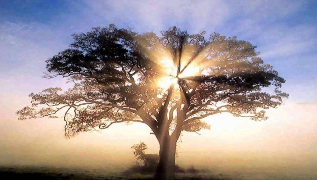 Inilah Pohon Surga yang berada di Dunia